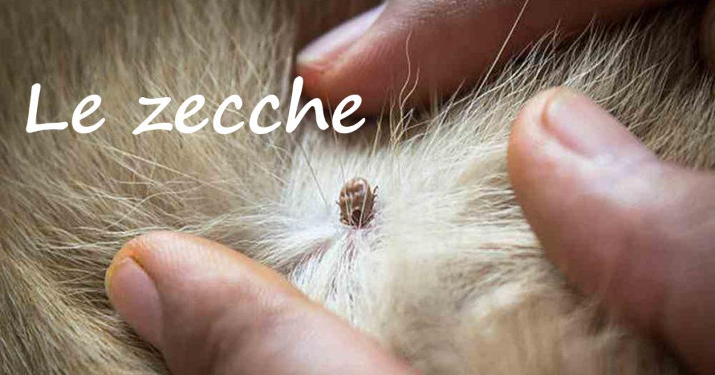 Uova Zecche In Casa. Nuovo With Uova Zecche In Casa. Le Zecche With ...